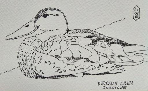 Duck at Trout Inn - Godstow
